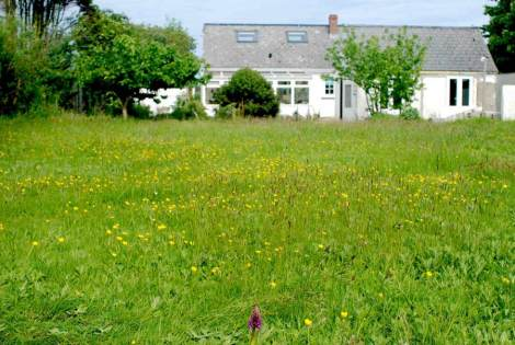 Our Cornish meadow in year one
