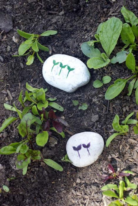 Seedling markers in the veg beds