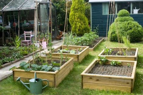 Our garden in Surbiton
