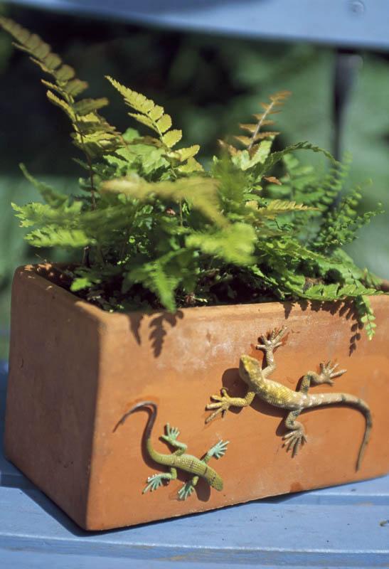 lizard-pot
