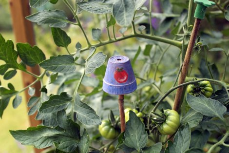 This one is for my tomato plants, a tiny plastic pot customised especially for the job