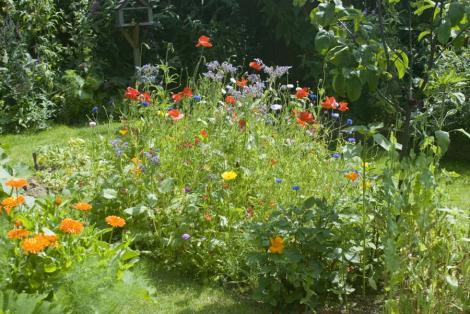 mini-meadow