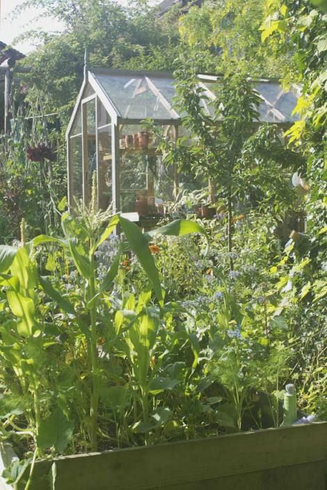 veg-garden-view-aug