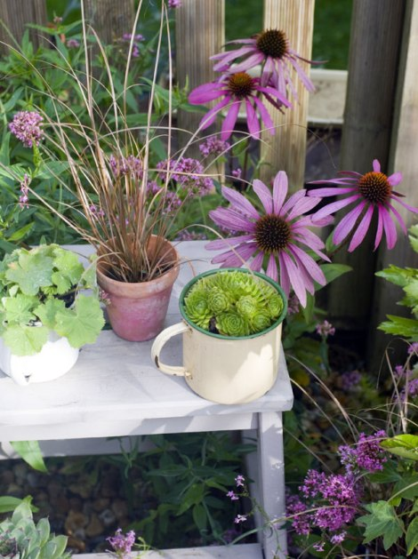 echinacea-and-pots