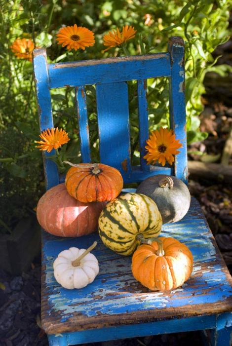 gourds-on-blue-chair