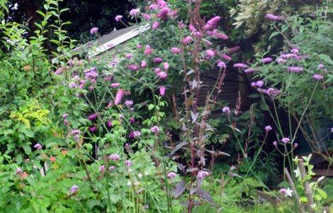my garden-vbs