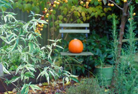 autumn-budd